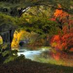 """""""Autumn Reverie"""" by JessicaJenney"""
