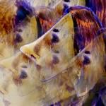 """Trance Lady"" by designmia"