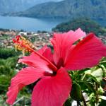 """""Red Bloom in Lake Como"""" by AlexandraZloto"
