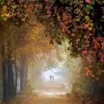 """""""Stroll In The Fog"""" by zenin"""