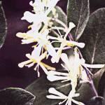 """""""floral"""" by cloudsinmycoffee"""