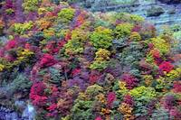 1000 Colours of Fall