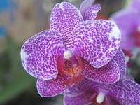 Orchids Collection 02