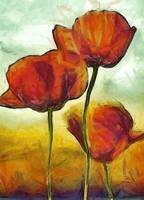 Poppies and golden fields