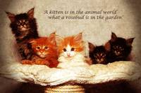 Five Kittens with a quote