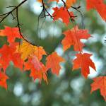 """""""Autumn Leaves"""" by FlattenPhotography"""