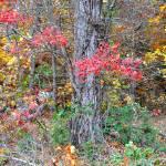 """Fall in Virginia"" by FlattenPhotography"
