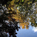 """Autumn Reflections"" by waynelogan"
