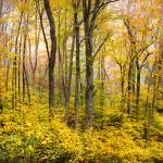 """Autumn Western NC Fall Foliage - Forest for the Tr"" by DAPhoto"
