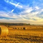 """Halcyon Harvest Days"" by derekbeattieimages"