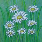 """White Daisies"" by thuraya"