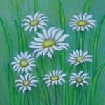 """""""White Daisies"""" by thuraya"""