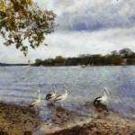 """Pelicans at Noosa"" by MikeNichol"