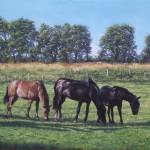"""three horses in field"" by martindavey"