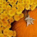 """Orange & Gold"" by WildAboutNaturePhotography"