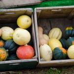 """""""Gourds"""" by WildAboutNaturePhotography"""