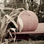 """""""Autumn Pumpkin"""" by WildAboutNaturePhotography"""
