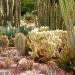 """A Walk Thru Cactus-1012"" by DesignerPhotographyByNancy"