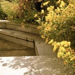 """Garden"" by rootsinlove"
