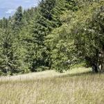 """Oak Grassland2"" by davidhowell"