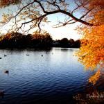 """Fall Lake View"" by flowerchild6482"