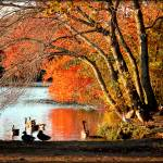 """Geese In Autumn"" by flowerchild6482"