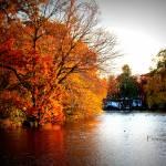 """""""Golden Autumn"""" by flowerchild6482"""