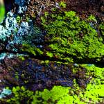 """Colorful Moss"" by TylerN"