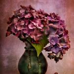"""Textured Hydrangea"" by AnnG"