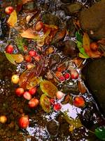 Tropical Fruit in a Stream