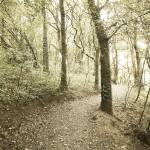 """Ynys Newydd nature trail"" by Williams_Toni"