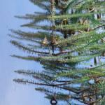 """""""Xmas tree?"""" by kvalka"""