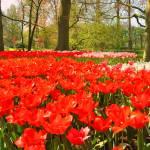 """""""European Garden"""" by greencricketphoto"""