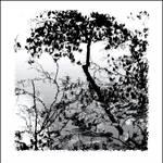 """""""Natures Design"""" by waynelogan"""
