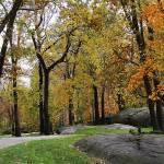 """""""Fall Foliage"""" by MCaliPhotography"""