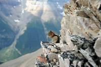 Ground Squirrel on the rock above the precipice