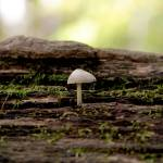 """""""mushroom"""" by i2i"""