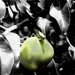 """Apple Hopper"" by ralphnelsen"