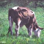 """brown and white cow eating grass"" by martindavey"