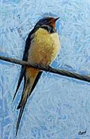 a swallow on a wire