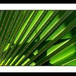"""Plant"" by Auero"