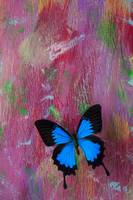 Blue butterfly on colorful wooden wall