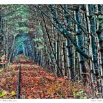 """""""Track to Nowhere"""" by aknbean"""