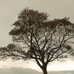 """Tree"" by FantaSeaArt"