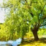 """""""Daylesford In Victoria"""" by MikeNichol"""