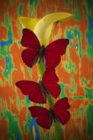 Three red butterflies on yellow calla lily