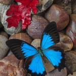"""Red leaf and blue butterfly"" by photogarry"