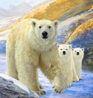 sudden meeting / polar bear family