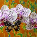 """Orchids with speckled butterfly"" by photogarry"