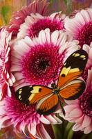 Butterfly on pink mum